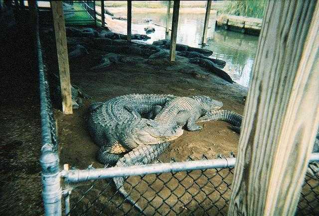 Alligator adventure family fun business directory - Interior design jobs myrtle beach sc ...