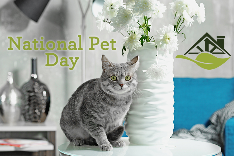 national-pet-day-interior-design